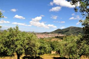 Uno degli oliveti - Gonnosfanadiga