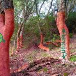 quercia sughero sardegna