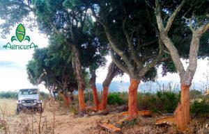 bosco sardegna mediterraneo