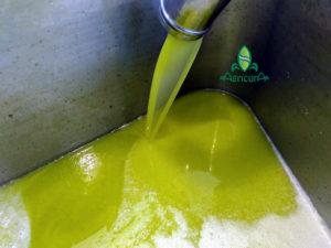 olio extravergine Sardegna Gonnosfanadiga